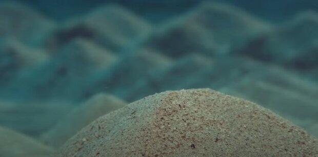 дно Тихого океану