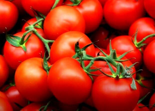томати помідори