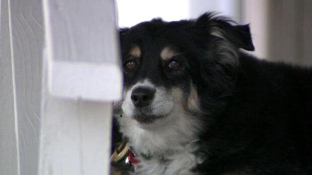 Собачка Лулу отримала у спадок 5 мільйонів доларів