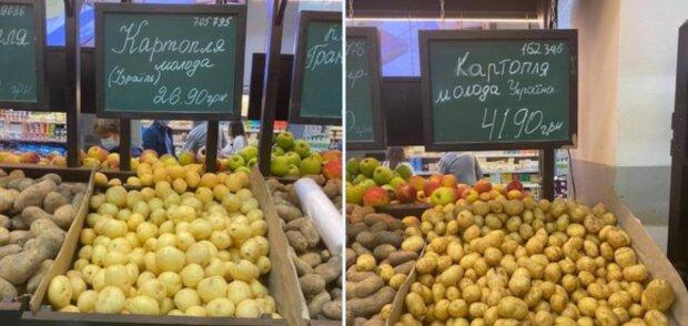 Фото картоплі