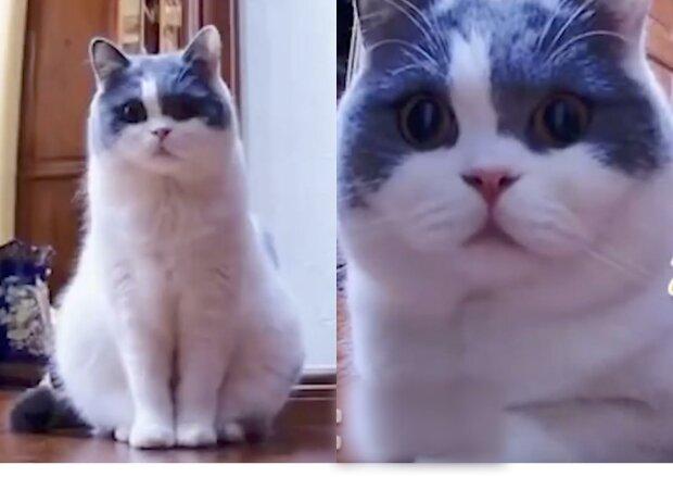 Кішка всю ніч просиділа перед камерою