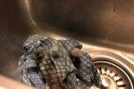 Хлопець кинув брудну ганчірку у раковину і вже за кілька днів на нього чекав новий мешканець