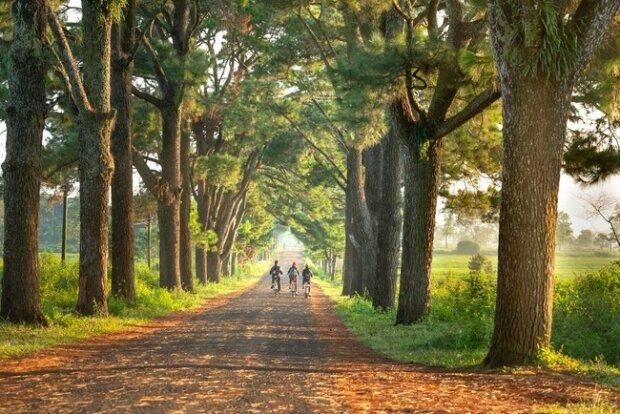 природа, прогулянки, ліс, парк \\ фото Сегодня