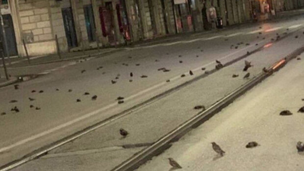 Вулиці Риму після нового року всіяли сотні тіл птахів