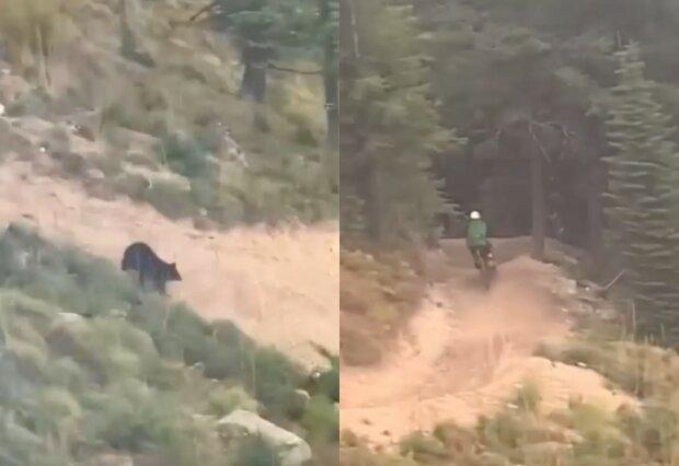 ведмідь женеться за велосипедистом
