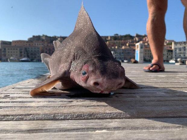 угловата акула