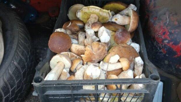 В межах Чорнобильського заповідника спіймали любителів радіоактивних грибочків