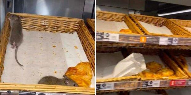 щури в британському супермаркеті