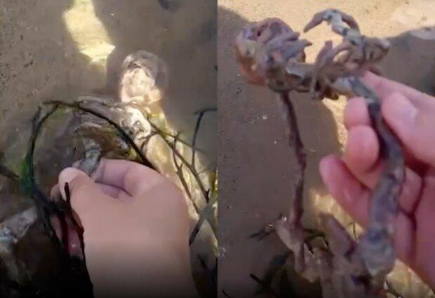 Хлопець знайшов на березі скелет русалки