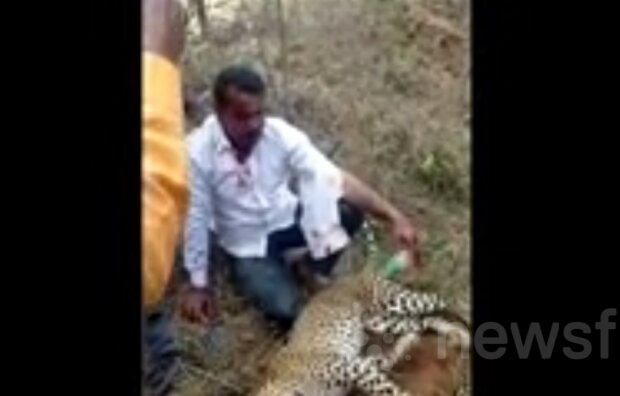 Чоловік голими руками вдавив леопарда