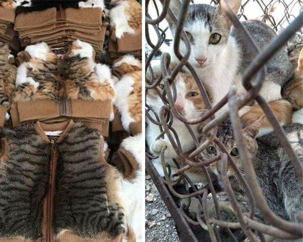 шуби та жилетки з котів у Китаї