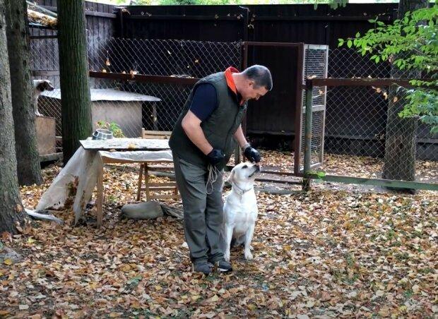 дресирування пса