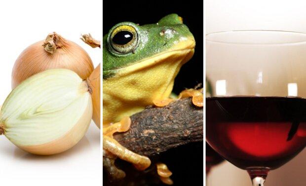 цибуля, жаба, вино