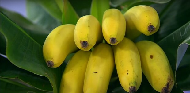 Користь бананів для організму