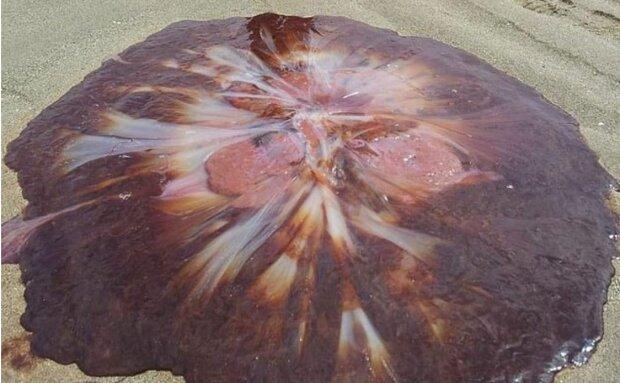 величезна медуза