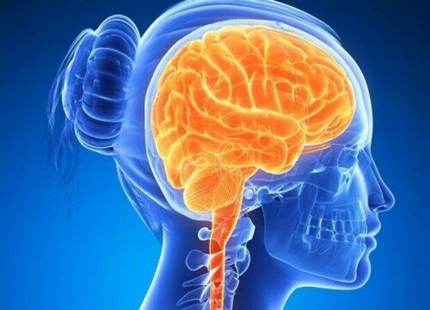 Харчові продукти, які негативно впливають на наш мозок та пам'ять