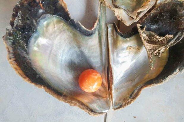Рибалка на пляжі знайшов унікальну помаранчеву перлину Мело