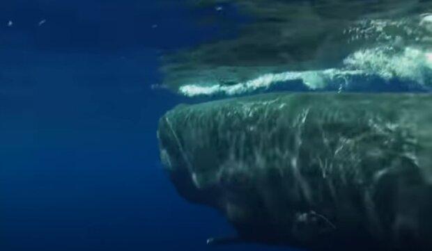 Кит. Фото: скріншот відео.