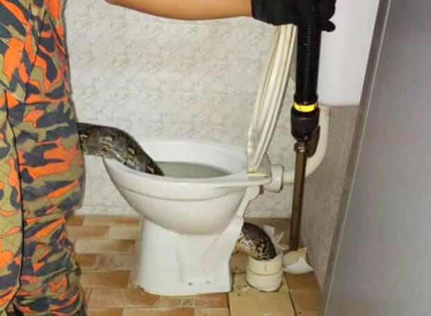 Величезна змія схопила чоловіка за зад прямо з унітазу