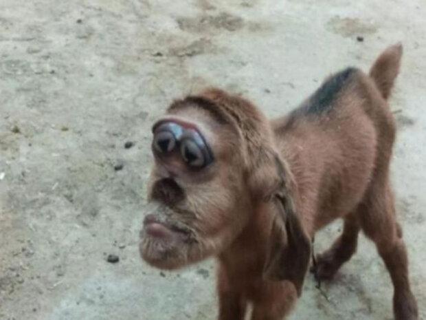козеня з мордою мавпи і очима сердечками