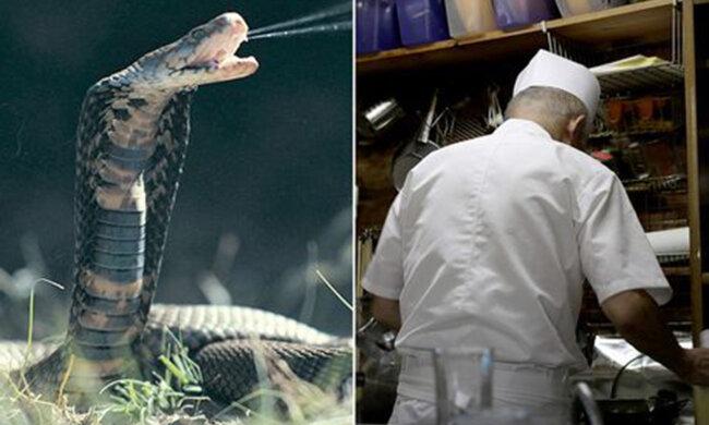Змія вкусила кухаря після того, як він відрубав їй голову