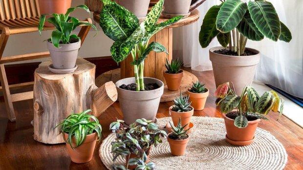 Топ 7 кімнатних рослин що стануть талісманами та привернуть щастя та вдачу