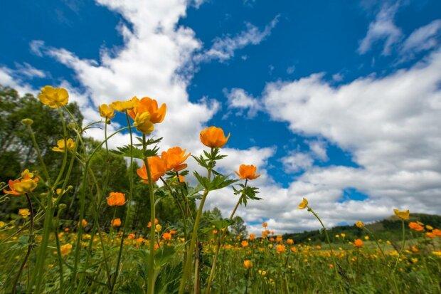 поле, весна, погожий день, народні прикмети