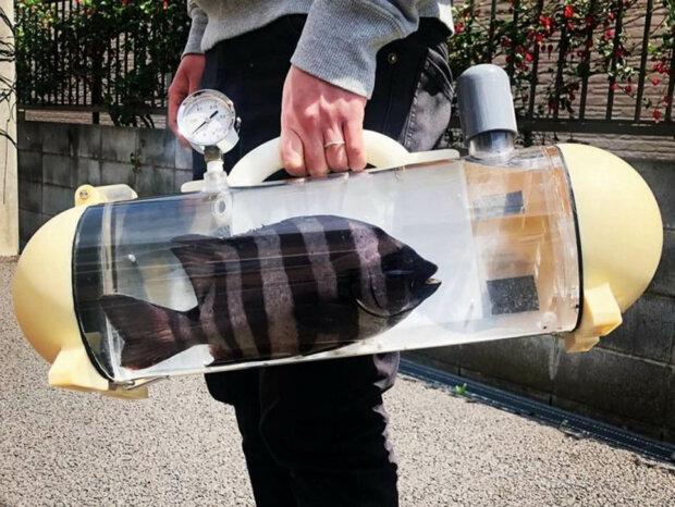 кейс для живої риби кацуге \\ фото katsugyo_bag/Instagram